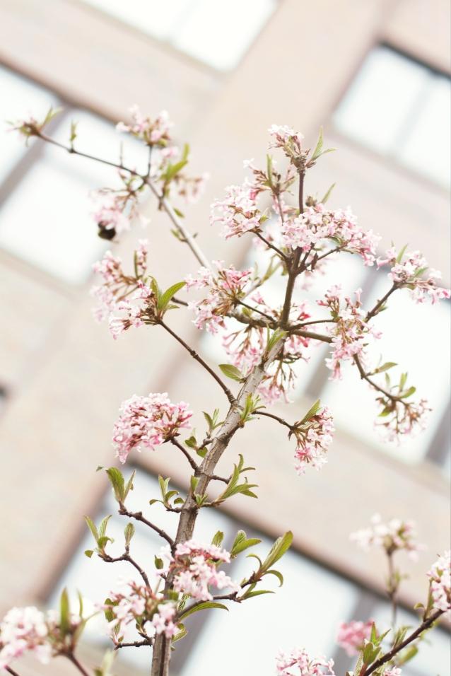 spring_highline