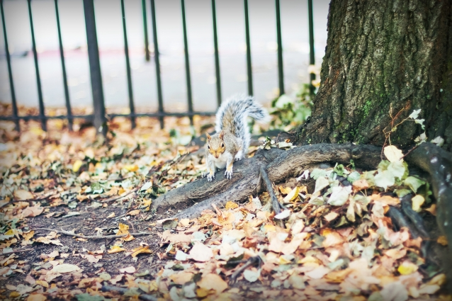 fashion_in_the_park_fall_blogger_squirrel